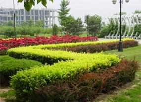 重庆市政绿化