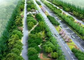 浦东道路绿化
