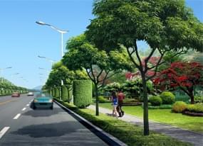 金华道路绿化