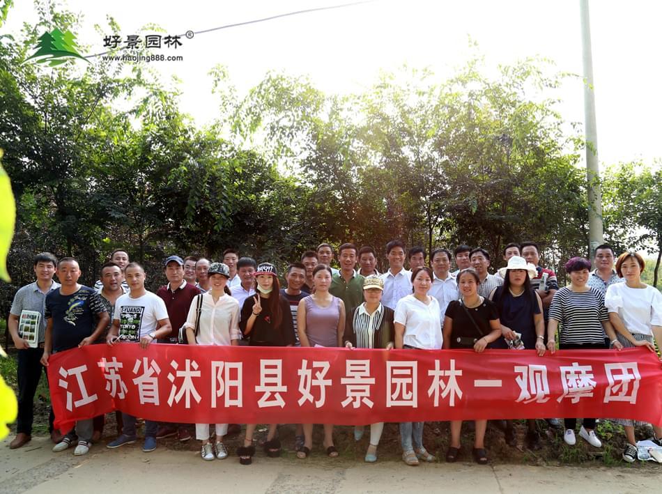 沭阳县好景园林苗圃观摩活动