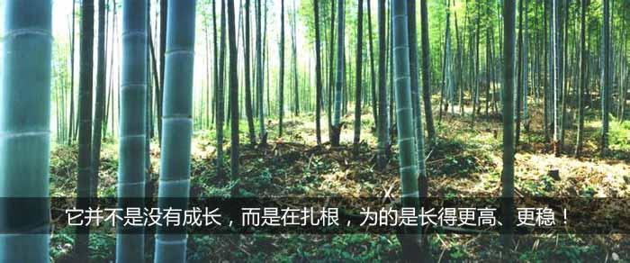 绿化苗木基地